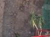 kanu-ag_in_der_kletterhalle8_20060407_2024040571